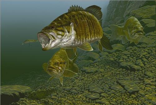 Al agnew nature art fine art prints for Bass fishing art